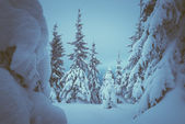 Zimní pohádka v lese — Stock fotografie