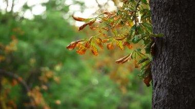 Foglie di autunno nel parco. — Video Stock