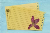 Empty paper with decoration — Stock Photo