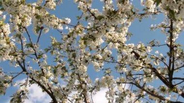 Fast motion apple tree on the sky — Stockvideo