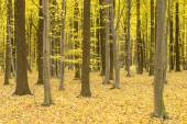 緑と黄色の葉を持つ木 — ストック写真
