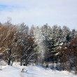 Trees in a forest covered with white snow — Stock Photo #58831213