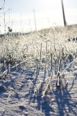 The plant on the ground covered with white snow  — Стоковое фото