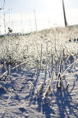 The plant on the ground covered with white snow  — Foto de Stock