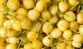 Fresh yellow cherry gathered — Stock Photo