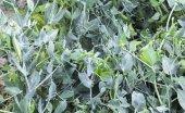 Texture - fresh green peas in the pod — Stock Photo
