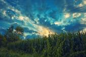 Cloud sky on grain field — 图库照片