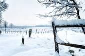 Snow on the vineyard — Stock Photo