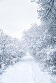Snowy shape — Stock Photo