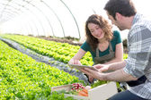 Farmer teaching new employee to gardening — Stock Photo