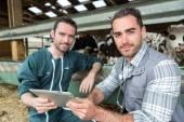 Fazendeiro e veterinário trabalhando juntos em um celeiro — Fotografia Stock