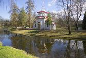 View Rasping (China) arbor day in may. Tsarskoye Selo — Stock Photo