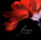 Invert soft focus flower background with copy space. Made with l — Stock Photo