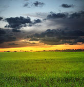 Evening sunset sky and meadow — Stockfoto
