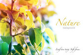 Nature background. Soft focus leaf tree twig. — Stockfoto