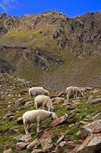 Sheep on mountain background — Стоковое фото
