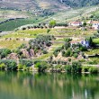 Valley of the River Douro, Portugal — Stock Photo #54044587