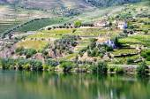 Valley of the River Douro, Portugal — Stock Photo