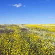 Camomiles and wild flowers on blue sky background — Stock Photo #72402881