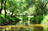 Landscape of lucefecit river, Portugal — Stock Photo