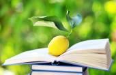 Yellow lemon on open book — Stock Photo