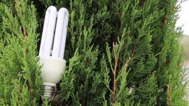 Tree and   saving light bulb — Stock Video