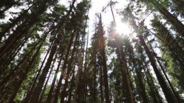Solen strålar passera träd — Stockvideo