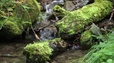 Beautiful small brook — Stock Video