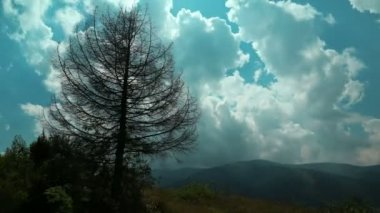 Time lapse of clouds and dead tree in mountains — Stock Video