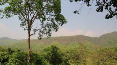 Trees in Erawan National Park — Stock Video