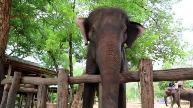 Elephant in zoological garden — Stock Video