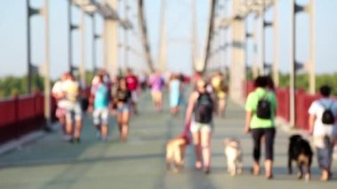 People and dogs on the bridge — Stock Video