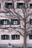 The tree grows next to the house — Stockfoto