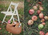 Garden chair on the lawn and fallen apples — Stock Photo