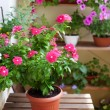 Beautiful balcony with small table and flowers, close-up. — Stock Photo #77967118