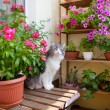 Beautiful balcony with small table, chair and flowers and cat. — Stock Photo #77970622