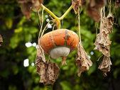 Fall Gourd — Foto de Stock