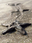 Starfish Legacy — Stock Photo