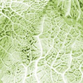 Green cabbage vegetable — Stock Photo