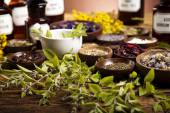 Fresh medicinal herbs — Stock Photo
