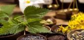 Medicinal herbs — Stock Photo