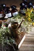 Färska medicinalväxter — Stockfoto