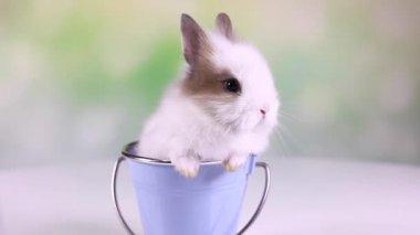Baby Bunny zitten in emmer — Stockvideo