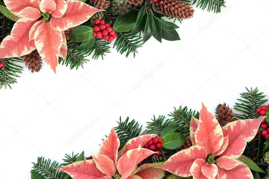 rosa weihnachtsstern blume grenze stockfoto 52255609. Black Bedroom Furniture Sets. Home Design Ideas