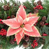 Poinsettia Decoration — Stock Photo