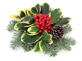 Variegated Holly Decoration — Stock Photo