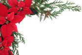Poinsettia Flower Border — Stock Photo
