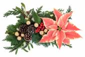 Poinsettia decoratie — Stockfoto