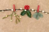 Christmas Flora — Stock Photo