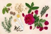 Love Potion Ingredients — Stock Photo